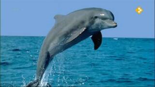 Het Klokhuis Aangespoelde walvissen