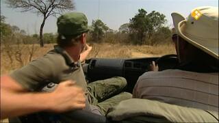Freek op safari Leeuwin redden