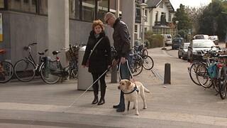 Een hond de weg uitleggen