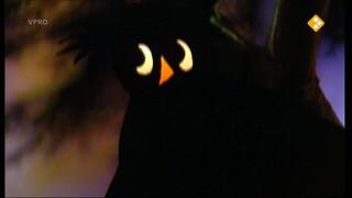 De heksenfee