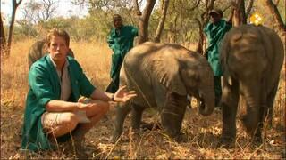 Freek in het wild Olifantenweeshuis
