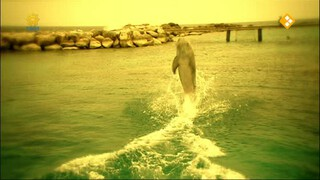 Zoovenirs: Zwemmen met dolfijnen