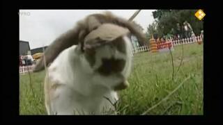 Pleun & konijn