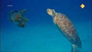 Luuk & schildpadjes