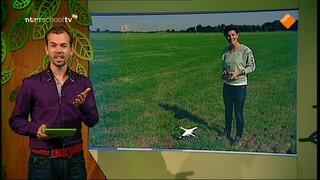 De Buitendienst van nieuws uit de natuur Vliegkunstenaars