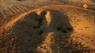 Wonder in de Woestijn