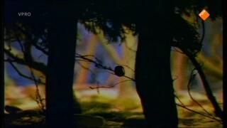 Verhalen van de boze heks Kastanjes gooien