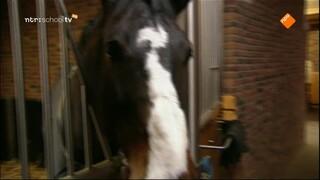 De Buitendienst van nieuws uit de natuur Paarden