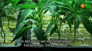 Fryslân DOK Fryske Himp