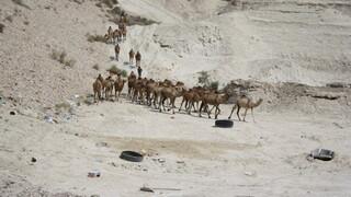 Retourtje Israël: Kerst