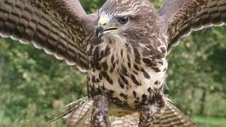 Koek & Ei De mes-en-vork vogel