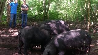 Melk en Honing Met boer Wim op 'varkenssafari'