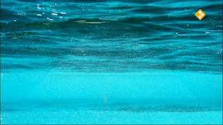 Oceanen & Voedselweb en energiestroming