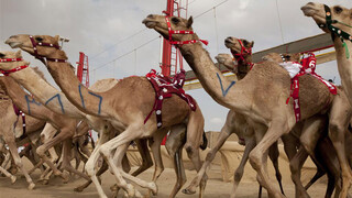 Wild Arabia: Zand, wind en sterren (1/3)