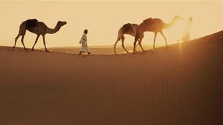 Wild Arabia: Drijfzand (3/3)