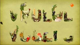Vroege Vogels: Walhalla voor weidevogels