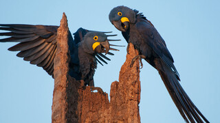 Natuur Op 2 - Wild Brazil (1) - Een Gevaarlijke Wereld