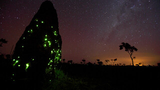 Natuur Op 2 - Wild Brazil (2) - Hoog Water