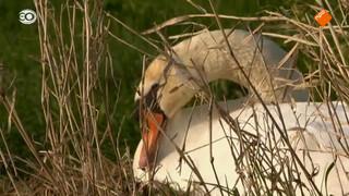 Dieren in de Nederlandse polder