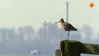 Overleven in de Nederlandse polder