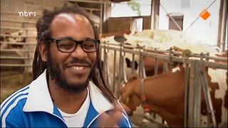 Grimassen - Marlon Kicken - De Zoektocht (willemstad, Curaçao)