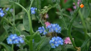 Huisje Boompje Beestje - Bijen