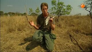 Freek Op Safari - Op Verkenning Rond Het Kamp