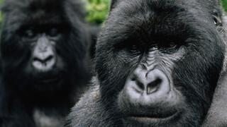 David Attenborough's Rariteitenkabinet - Slechte Reputatie
