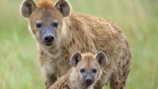 David Attenborough's Rariteitenkabinet - Vreemde Ouders
