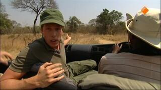Freek Op Safari - Leeuwin Redden
