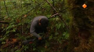 Freek In Het Wild - Zwarte Beren In De Achtertuin
