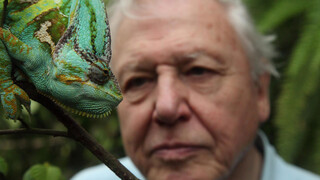David Attenborough's Rariteitenkabinet - Lekker Lang