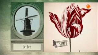 Het Klokhuis - Tulpen