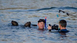 Steve's gevaarlijke dierenreis Bahama's
