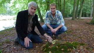 """""""De zeldzaamste paddenstoelen van Nederland"""""""