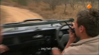 Leeuwen Boomslang