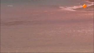 Freeks Wilde Wereld - Zeeschildpad En Komodovaraan