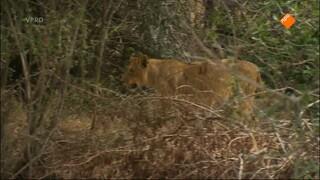 Freeks Wilde Wereld - De Buffel En Het Wrattenzwijn