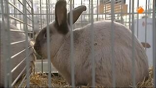 De Buitendienst van nieuws uit de natuur Dierenrechten