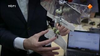 Robots en insectengedrag