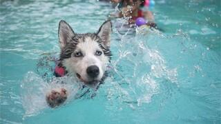 Man Bijt Hond - Maandag 12 Januari 2014