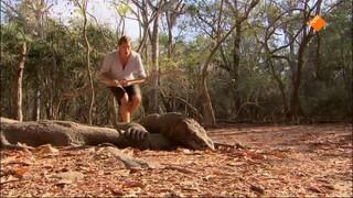 Freeks Wilde Wereld - Komodovaraan, Mantarog En Vliegende Honden