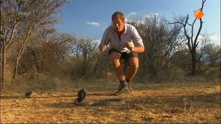 Freeks Wilde Wereld - De Cobra En De Olifant