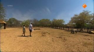 Freeks Wilde Wereld - De Witte Neushoorn