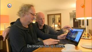 Fryslân Dok - Fryslân Dok: Koning Van Het Weiland