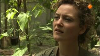 Het Klokhuis - Orang-oetan: Opvangcentrum