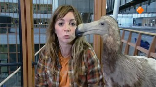 Het Klokhuis - Dodo