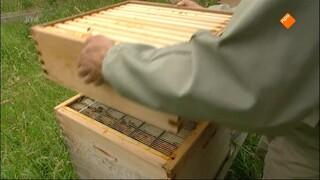 Het Klokhuis - Bijen