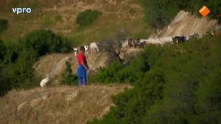 Griekse schapenboer