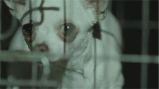 Zembla - Illegale Puppyhandel